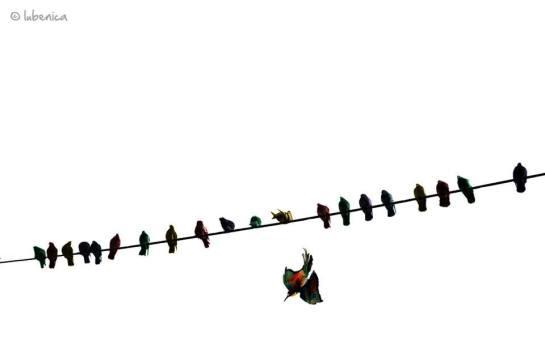 Pájaro del Alma